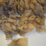 Cheviot Fleece #10