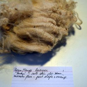 Cream Huacaya fleece