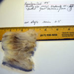 Rambouillet fleece