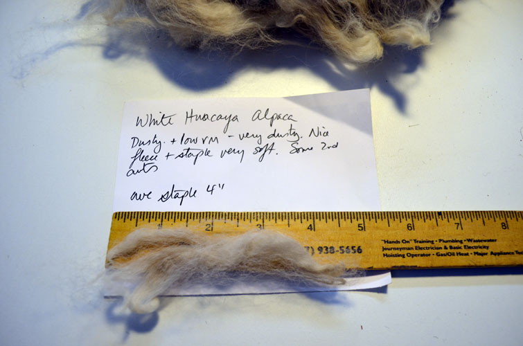 White Huacaya Alpaca fleece