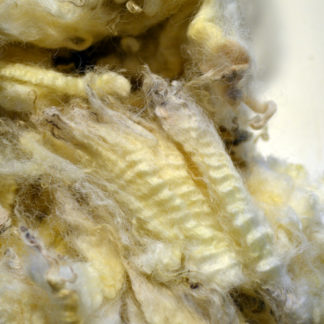British Cotswold fleece
