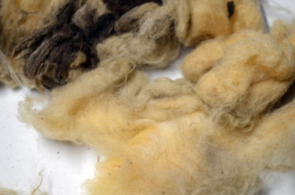 Badger Faced Welsh Torddu fleece