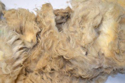 Scottish Blackface raw sheep fleece