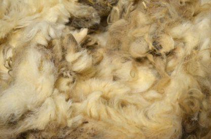 Scottish Blackface raw sheep wool