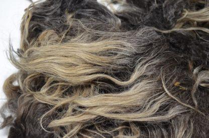 Icelandic sheep fleece