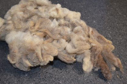 Finn sheep fleece